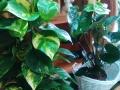 PLANTAS-ORQUIDEAS_FLORISTERIA_MERA_2016 (14)