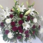 Centros-Flores-Mera (24)