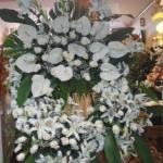 Corona-Flores-Mera (7)