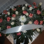 Corona-Flores-Mera (11)