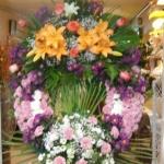 Corona-Flores-Mera (4)