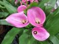 Orquidea (10)