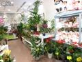 Tienda plantas (11)