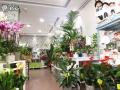 Tienda plantas (12)