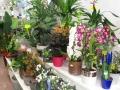 Tienda plantas (15)