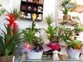Tienda plantas (16)