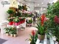 Tienda plantas (4)