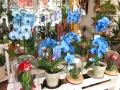Tienda plantas (6)
